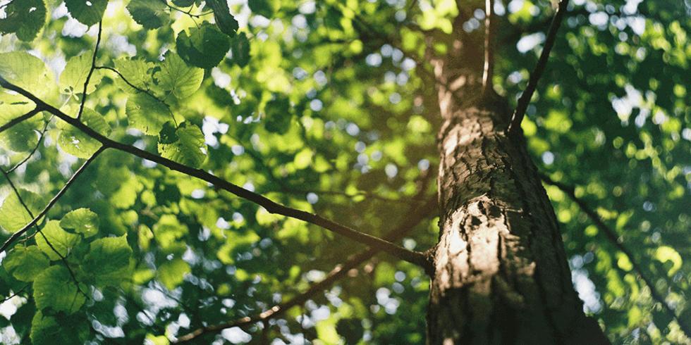 Wald ist wichtig als Wasserspeicher
